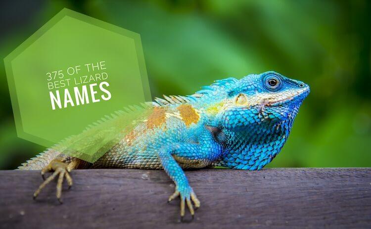 Best Lizard Names