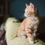 Best Orange Cat Names