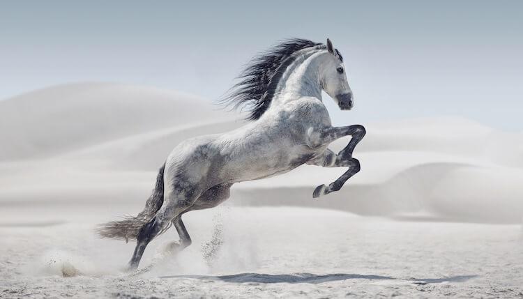 Best White Horse Names