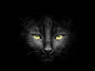 Black Cat Names Feature
