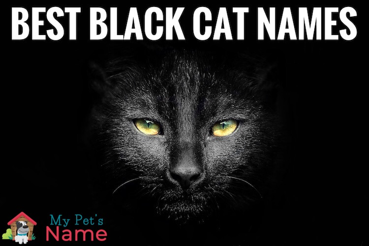 Black Cat Names
