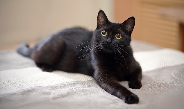 550 Badass Cat Names: The Biggest & Best Ferocious Feline