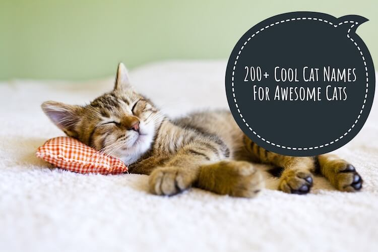 200 Cool Cat Names For Cute Cool Amp Cuddly Cats My Pet