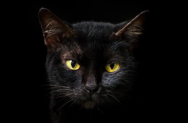 Famous Black Cats