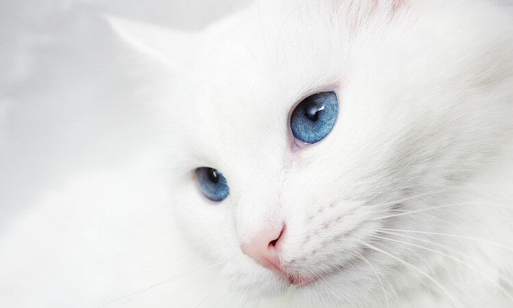 Female White Cat Names