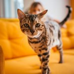200+ Cool Cat Names For Cute, Cool & Cuddly Cats – My Pet's Name
