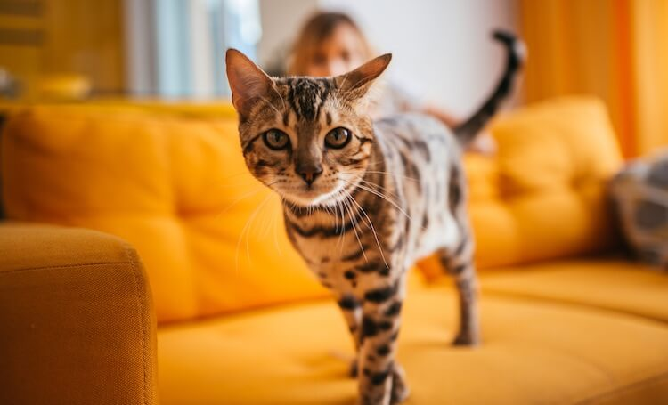 200 Cool Cat Names For Cute Cool Cuddly Cats My Pet S Name