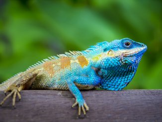 375+ Lizard Names: The A-Z Of Funny, Cool & Good Names for