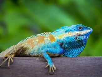 Lizard Names Feature