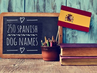Spanish Dog Names Feature