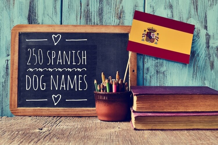 250 Spanish Dog Names Inspired by Spanish Food, Movies