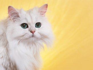 Unique Cat Names Feature