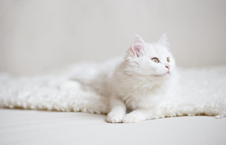 White Cat Names
