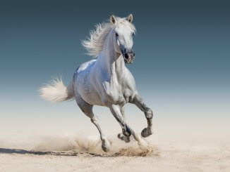 White Horse Names Feature