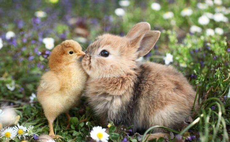 Best Bunny Names