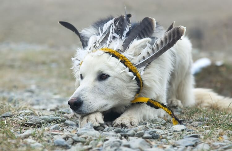 Native American Dog Names: 250+ Indigenous Names With Meanings – My