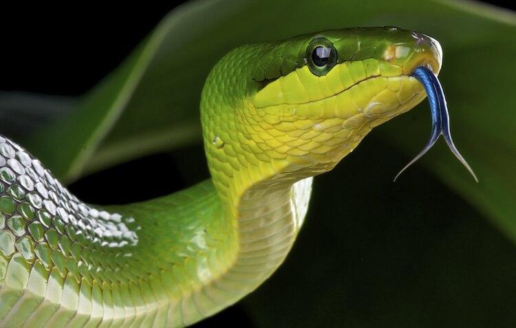 Best Snake Names