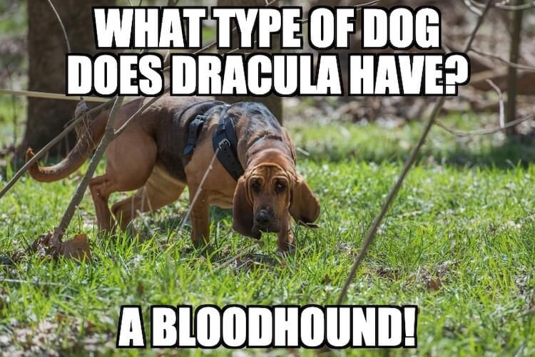 Bloodhound Dog Joke