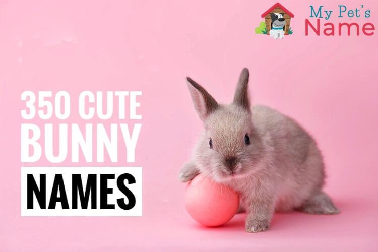 Bunny Names