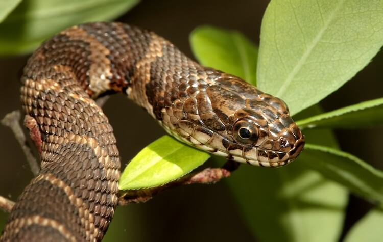 Snake Names: 400 Best Names For Your Slithering Sidekick – My Pet's Name