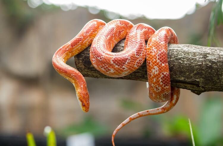 Good Snake Names