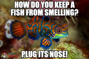 How do you keep a fish from smelling? Plug its nose!