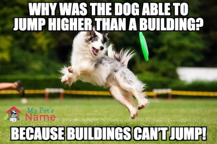 Jumping Dog Pun