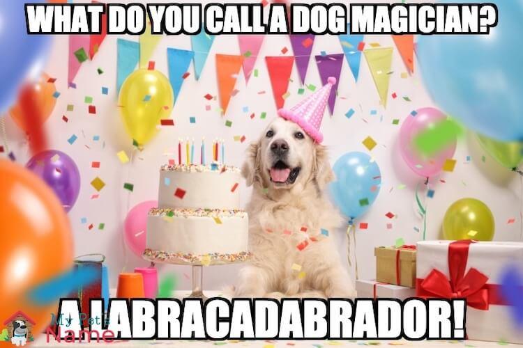 Labracadabrador Dog Meme