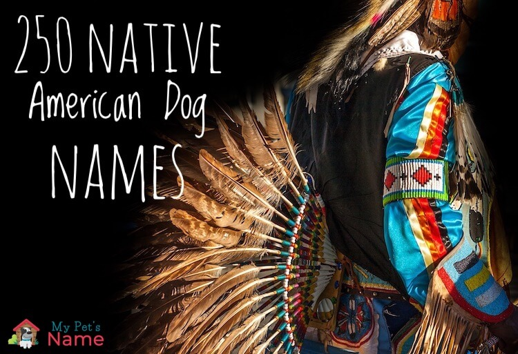 Native American Dog Names: 250+ Indigenous Names With