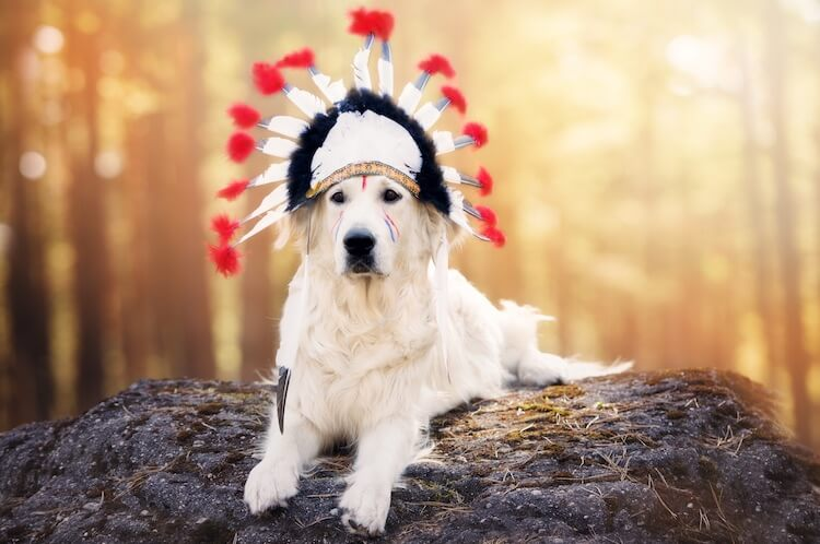 Native American Names for a Dog