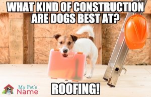 Roofing Dog Pun