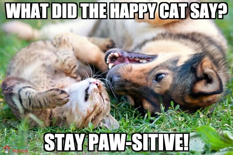 What did the happy cat say? Stay paw-sitive!