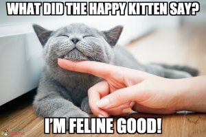 What did the happy kitten say? I'm feline good!