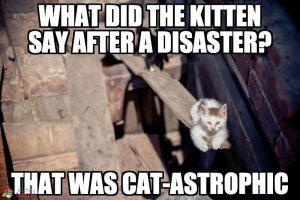 What did the kitten say after a disaster? That was cat-astrophic