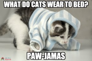 What do cats wear to bed? Paw-jamas