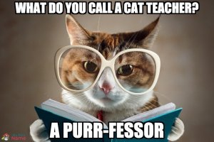 What do you call a cat teacher? A purr-fessor
