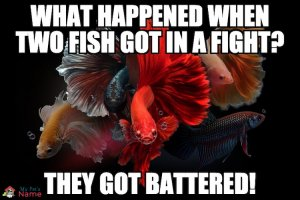What happened when two fish got in a fight? They got battered!
