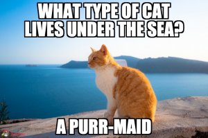 What type of cat lives under the sea? A purr-maid