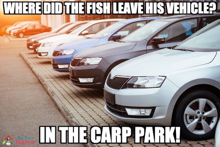 Where did the fish leave his vehicle? In the carp park!