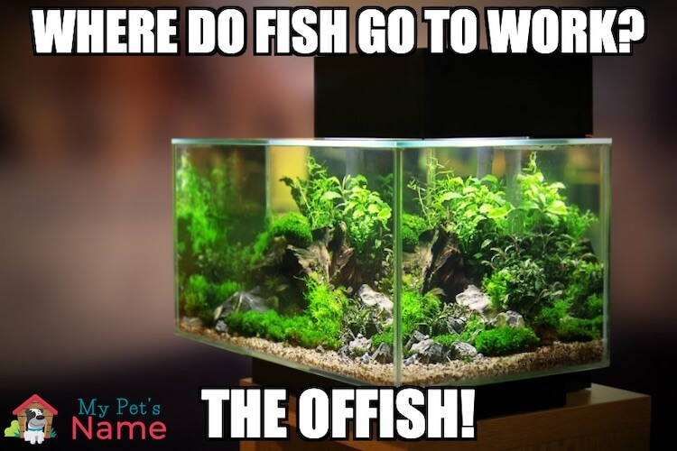 Where do fish go to work? The offish!
