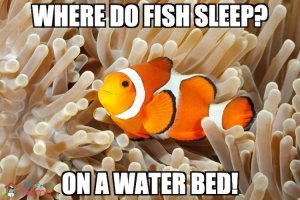 Where do fish sleep? On a water bed!