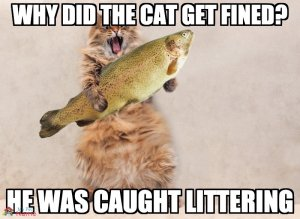 Why did the cat get fined? He was caught littering