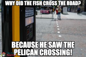 Why did the fish cross the road? Because he saw the pelican crossing!