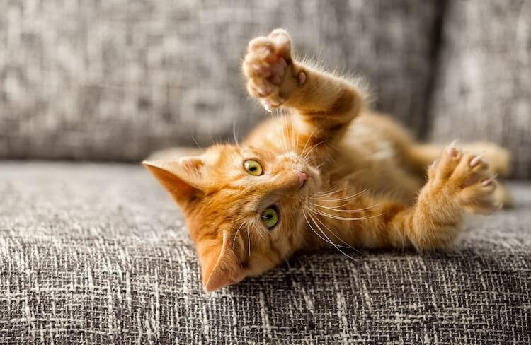Cat Names for Orange Cats