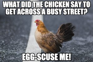 Chicken Crossing Street Joke