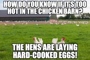 Chicken Egg Pun