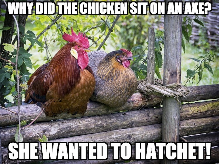 Chicken Meme