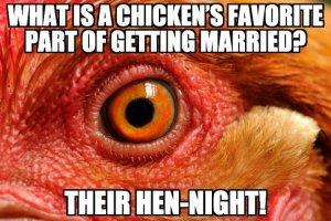 Chicken Pun