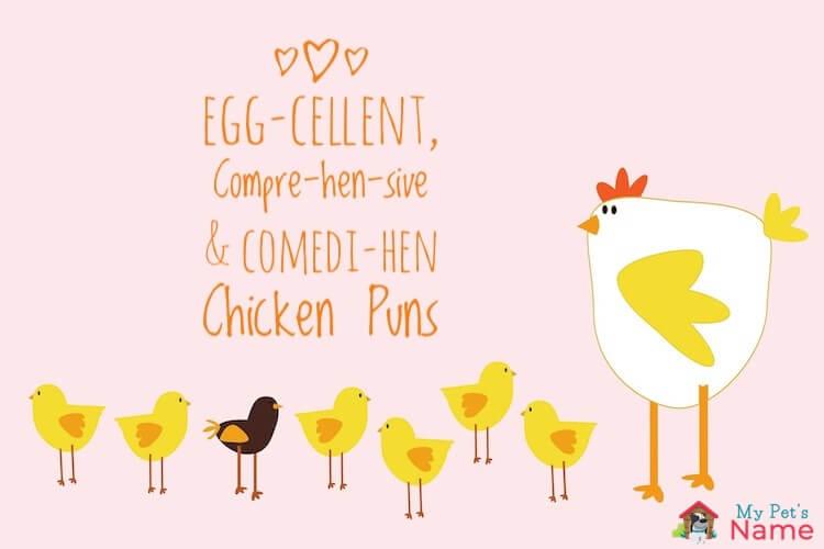 98 Chicken Puns: Egg-cellent, Compre-hen-sive & Comedi-hen Puns – My