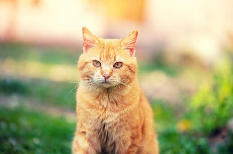 Choose A Great Orange Cat Name